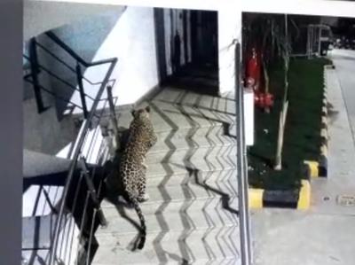 मॉल में दिखा तेंदुआ