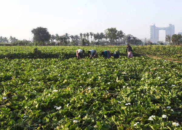 सरकारी कर्मचारी और इनकम टैक्स देने वालों को पीएम किसान योजना का लाभ नहीं