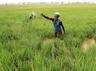 farmers will get first installment of pm kisan scheme