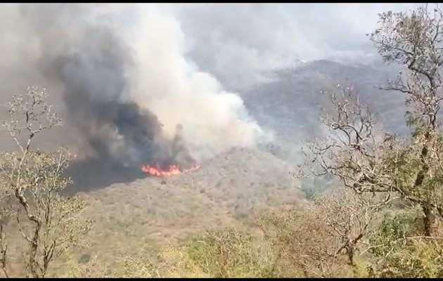 कर्नाटक के बांदीपुर के जंगलों में लगी भीषण आग