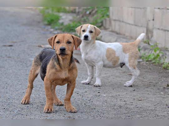 street-dogs