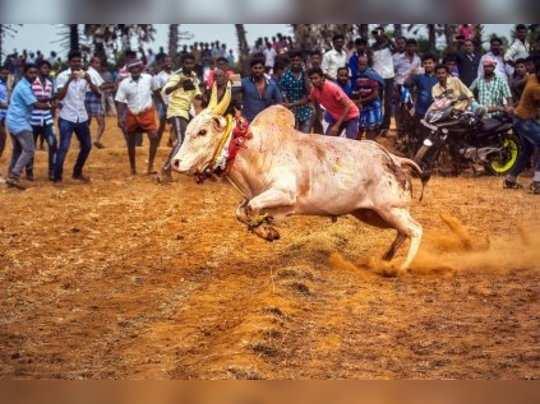 tamil-nadu-two-gored-to-death-during-manjuvirattu
