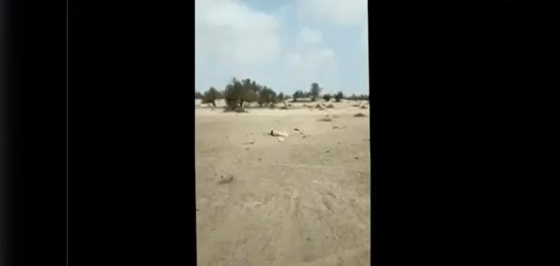 राजस्थान में भारतीय हवाई क्षेत्र में घुसा पाकिस्तानी ड्रोन, वायुसेना ने मार गिराया