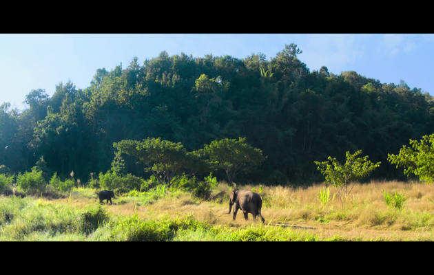 फिल्म JUNGLEE का ट्रेलर रिलीज