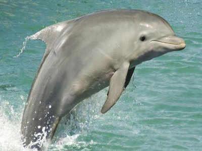 भारत में डॉल्फिन देखने के लिए बेस्ट हैं ये जगह