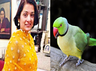 royal parrot wgoes missing rs 20000 reward announced