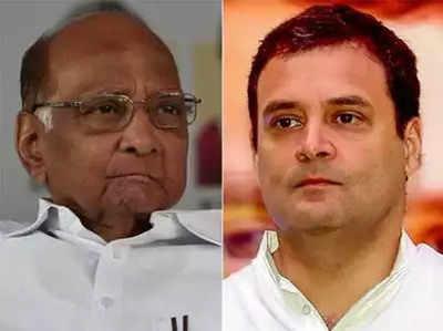 गुजरात की सभी सीटों पर लड़ेगी एनसीपी