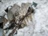 indian army finds wreckage of us war plane from world war ii in arunachal pradesh