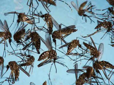 फतेहपुर सीकरी के एक इलाके में मच्छर है चुनावी मुद्दा