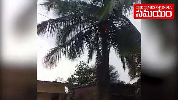 watch lightning strike on coconut tree in jangaon