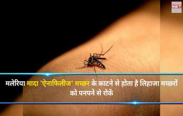 वर्ल्ड मलेरिया डे : मच्छरों से बचें ताकि न हो मलेरिया
