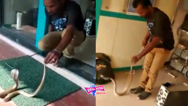 watch snake found inside atm in coimbatore