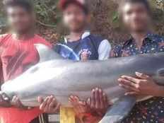 dolphin lands up in fish market teens take selfies