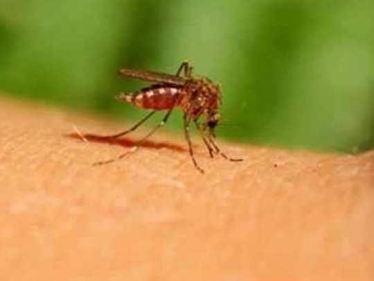डेंग्यूचे १६४, हिवतापाचे ५९ बळी