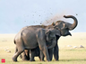 two villagers killed in attack of wild elephants in chattisgarh