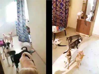 फ्लैट में मिले कुत्ते और बिल्ली