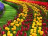 must explore sikkim international flower festival