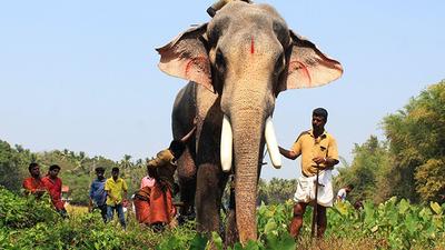 Image result for thechikottukavu ramachandran
