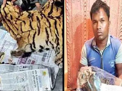 बाघों पर संकट