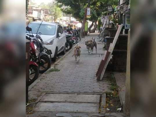 कुत्र्यांचा सुळसुळाट