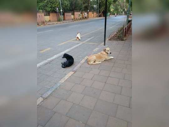 भटक्या कुत्र्यांची समस्या...