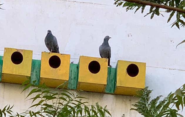 भीषण गर्मी के बीच पक्षियों को बचाने के मिशन में जुटे जयपुर के यह शख्स