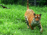 delhi zoo is one of the largest and well maintained parks around asia