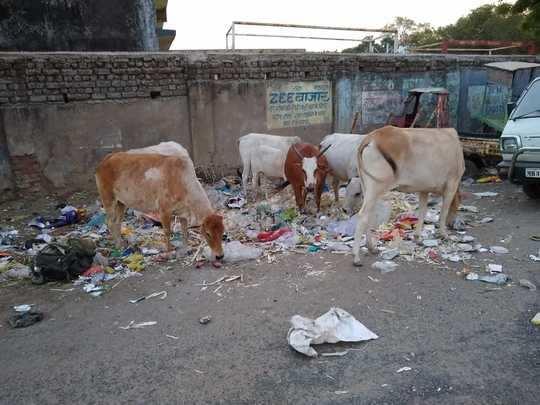 सर्वत्र साचले कचऱ्याचे ढीग