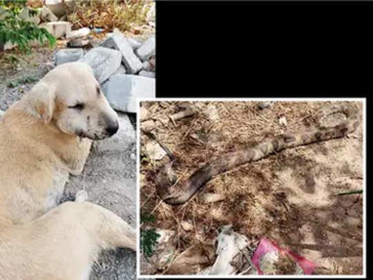 stray-dogs-sacrifice