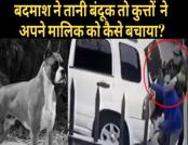 सोशल स्यापा: कुत्तों ने मालिक को बदमाशों से कैसे बचाया?