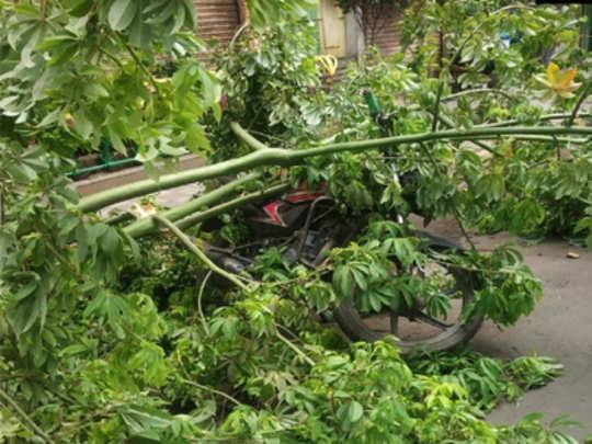 trees-collaped-in-mumbai-ma