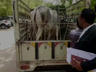 rajasthan cows reached court in jodhpur then disposed of ownership