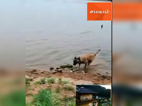 this dog saved the life of little girl this video gone viral amoung social media
