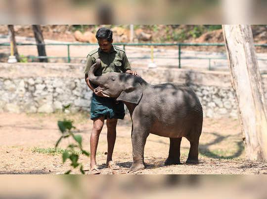 kottoor elephant