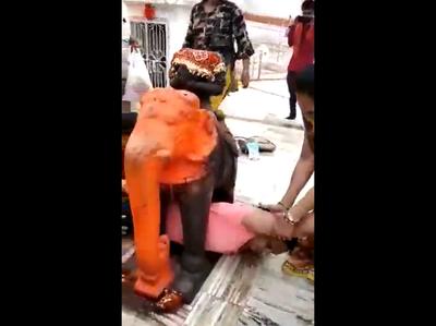 हाथी के पैरों के बीच फंसी महिला