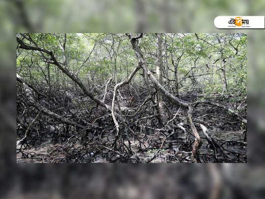 54 thousand mangroves to be razed for mumbai ahmedabad bullet train in maharashtra