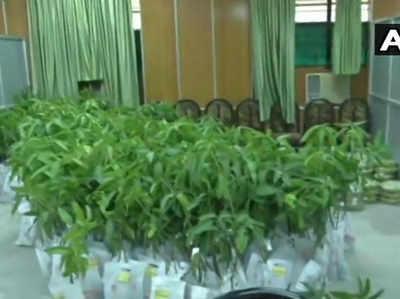 बिहार विधानसभा में आम के पौधे