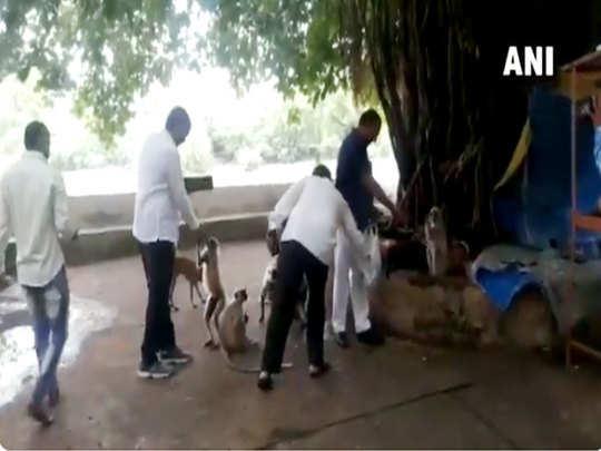 कुत्तों और बंदरों को खिलाते कांग्रेस विधायक
