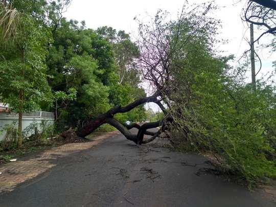 झाड पडले