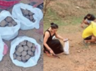 seed bomb in aravali hills to increase greenery