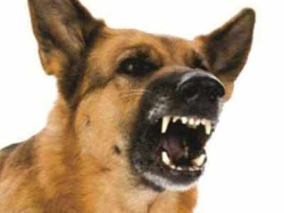 कुत्ते ने तीन बच्चों पर किया हमला