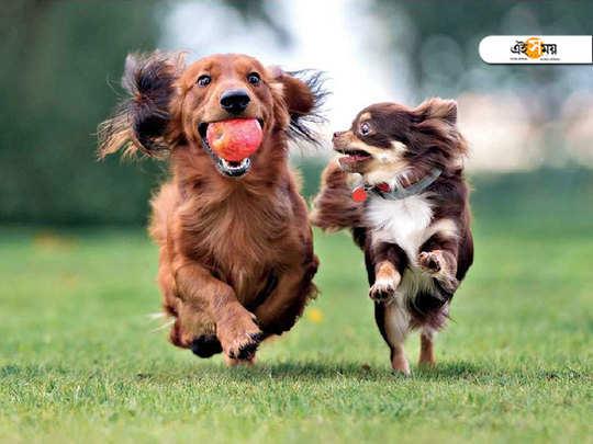 training your pet dog properly