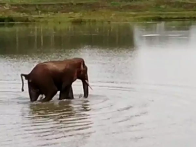 वनरक्षक को मारने वाला हाथी
