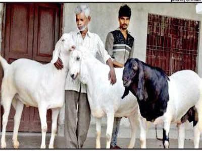 बकरों के साथ अब्दुल करीम