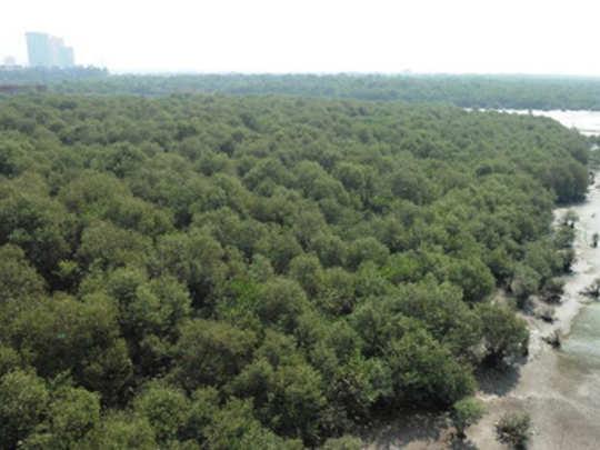 मुंबईत उभी राहणार १०० वने