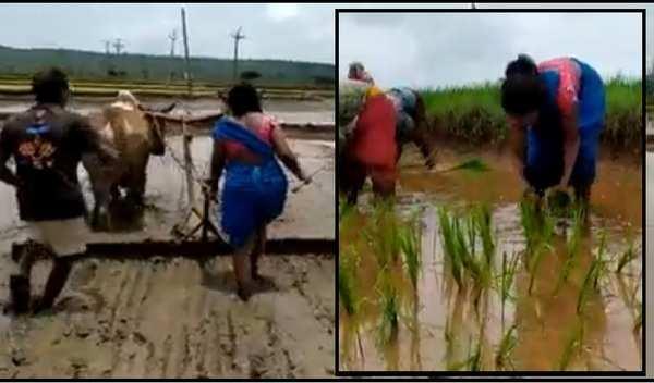 bhupalpally sub registrar taslima worked as daily labour