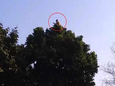 पेड़ के शिखर पर आसन लगाते हैं बाबा