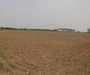 जुगाड़ तकनीक: हजारीबाग में स्कूटर के इंजन से खेत की जुताई कर रहा किसान