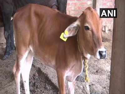 पशुओं के टैगिंग की जिम्मेदारी पशुपालन विभाग को दी गई है