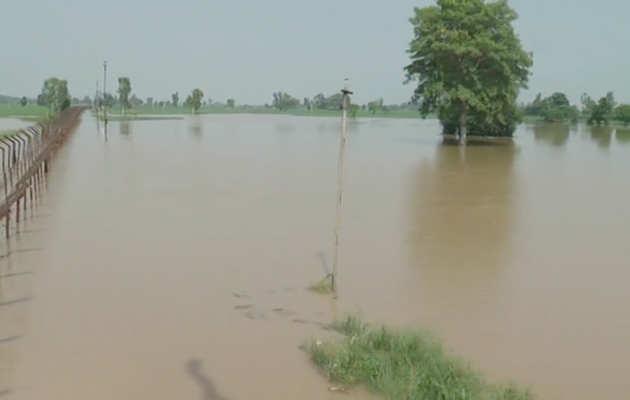 पंजाबः पाकिस्तान ने छोड़ा सतलज नदी का पानी, फिरोजपुर के 17 गावों में बाढ़ से फसल ख़राब